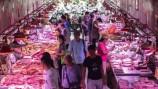 Covid-19 pode ter chegado a Wuhan pelo comércio de animais selvagens, diz OMS