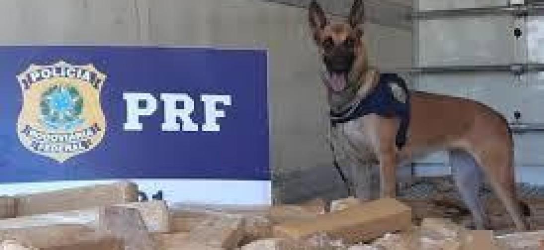 PRF apreende uma tonelada de maconha na BR-040, em Três Rios